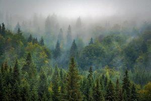 Wald (Bergadder (Pixabay))