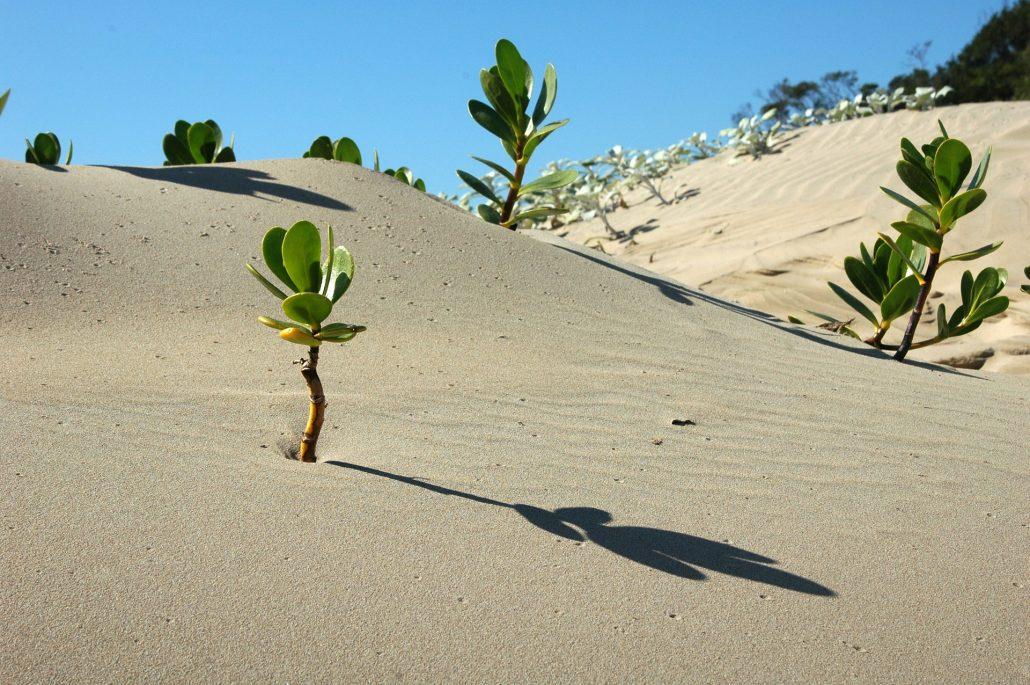 Keinling Wüste (Image by 12019 (Pixabay))