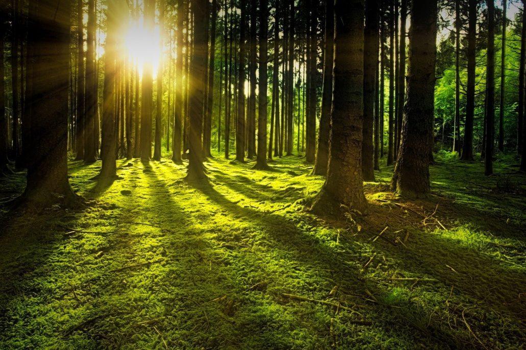 Wald (Image by jplenio (Pixabay))
