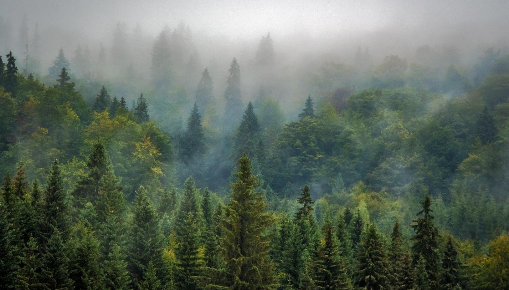 Mehr Wald, weniger Klimawandel